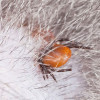 Travel First-Aid Tip for Dogs: Ticks!